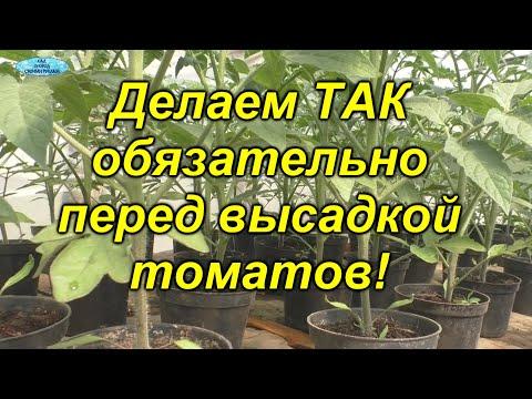 Мы никогда не высаживаем свои томаты, пока не сделаем эти ТРИ вещи!