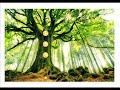 Méditation guidée: à la rencontre de votre arbre intérieur