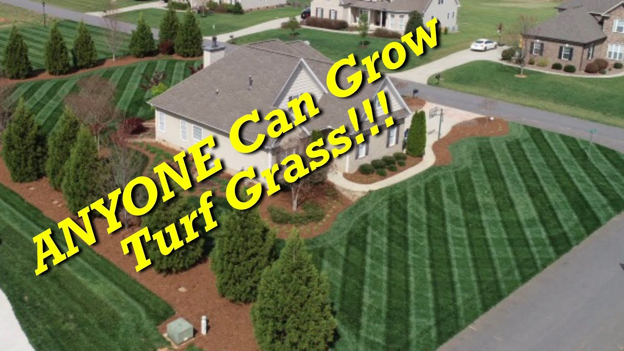 Lawn Care For Dummies Anyone Can Grow Turf Gr
