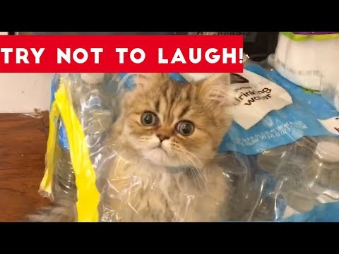 Thumbnail: Super FUNNY DOG AND CAT ANIMAL VIDEOS - Watch and DIE FROM LAUGHING