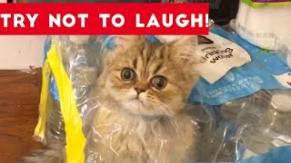Super FUNNY DOG AND CAT ANIMAL VIDEOS - Watch and DIE FROM LAUGHING