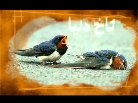 Bashar Zaxoy Mn Na Zani Reka Mn Hoya  Za7mata By Azad Zaxoy