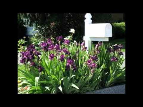 Full Sun Landscaping Ideas Front Yard