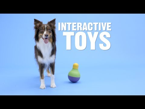 What Interactive Toy Is Right for My Dog?