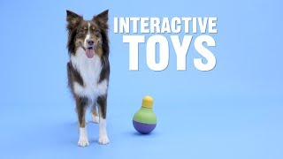 Interactive Dog Toys: Which One Is Right for Your Dog? | Chewy