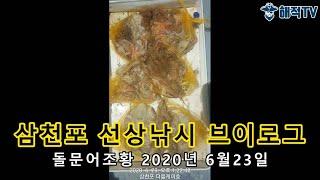 삼천포 돌문어조황 2020년6월23일 [선상낚시 브이로…