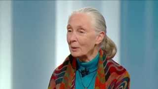 Jane Goodall on George Stroumboulopoulos Tonight: INTERVIEW