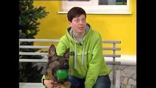 Двор на Субботней: бродячие собаки(Кинолог центра