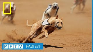 Fastest Dogs Compilation 2017 - Part 2