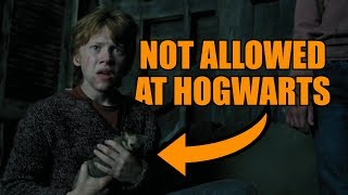 Why Ron is allowed to bring Scabbers to Hogwarts
