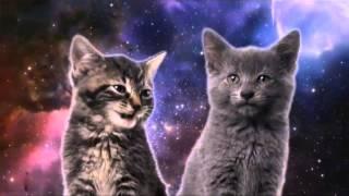 Клип в поддержку котиков.