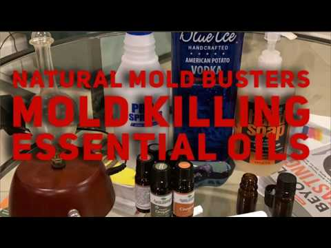 natural-mold-killing-essential-oils,-essential-oil-mold-spray