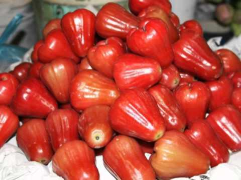 Rose Apple Health Benefits