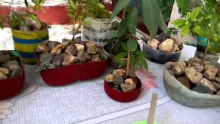 21 -  Creative gardening ideas with Re use of waste material (part-1) (Hindi/Urdu )  7/5/16