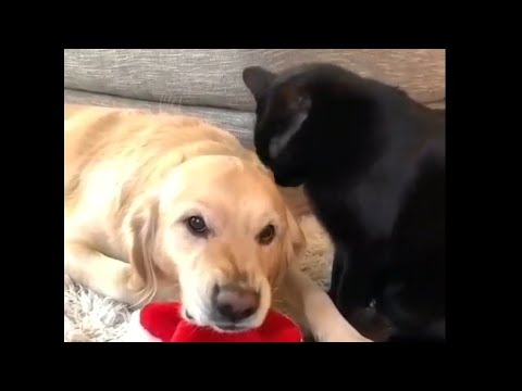 Funny Dogs and Animals Video Compilation   LOCKDOWN 🐶