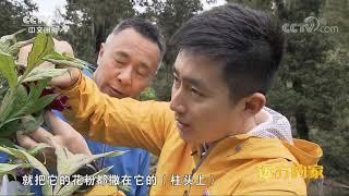 《远方的家》 20191005 大好河山 大山大水醉云贵| CCTV中文国际