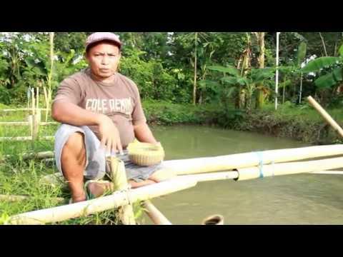 tambak ikan ambulu losari (adin motul losari)