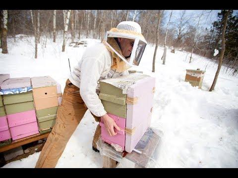 Treatment Free Varroa Control   Adrian Quiney   Marathon County Beekeeper's Association Conference 2