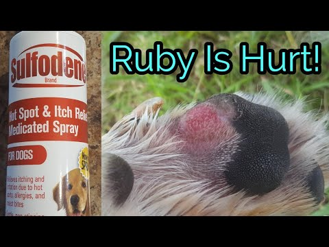 Ruby's Allergies | Chubby Jumpers