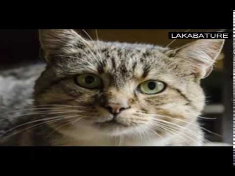 (Cute Kitten video) Funny Cat Photos - Pictures Of Cats - [best of]