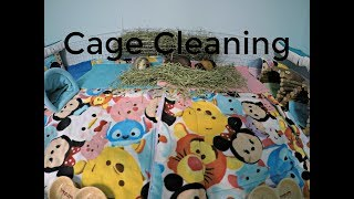 Stationary Cage Clean: 3by8 C&C Cage (Guinea Pig Trio)
