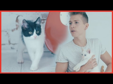 James McVey plays with KITTENS!! - The Vamps Takeover