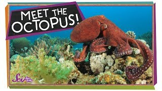 The Outrageous Octopus!