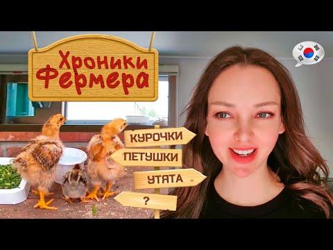 Наше хозяйство / Домашний влог / KOREA VLOG /