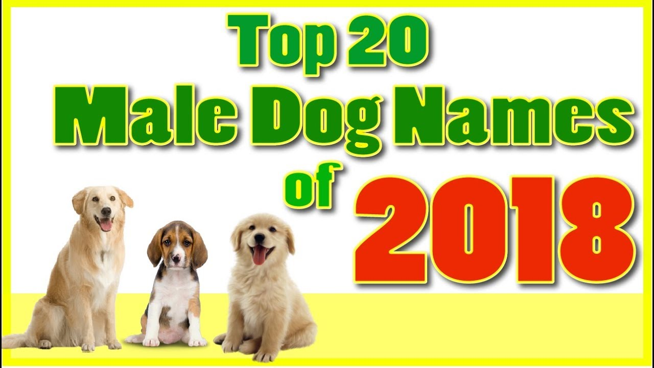 Top 20 Popular Male Dog Names With Meanings Boy Dog Names Youtube