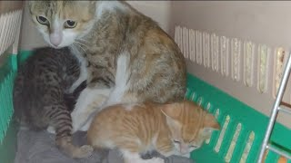 Rescued Mother Cat With 3 Newborn Kittens || Rescued Sick Cat Family Suffering From Winters