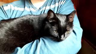 Черная кошка мурчит и не хочет уходить