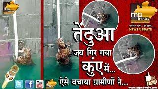 तेंदुए का Rescue Operation Live, कुएं से ऐसे निकाला बाहर