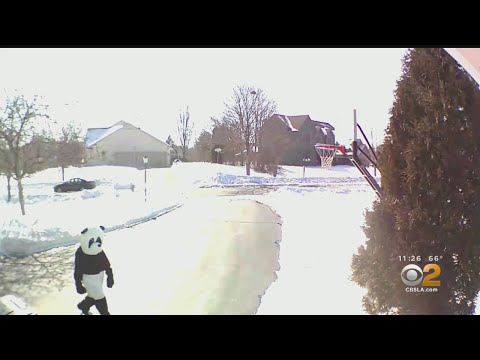 Greg Henn - Wisconsin Residents Call Cops Over Man in Panda Suit