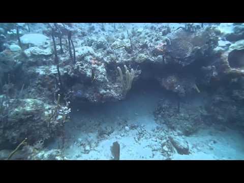 St Kitts Scuba Caribbean Sea Coral Reef