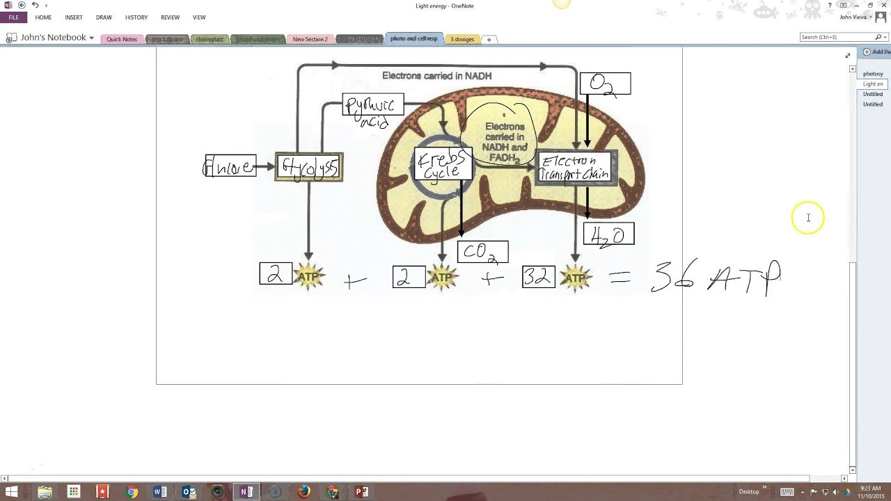cellular respiration diagram worksheet 1996 chevy truck stereo wiring answers photosynthesis and cell