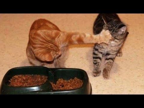 Videos Graciosos De Perros Y Gatos Peleándose Por La Comida Videos De Risa De Animales Youtube