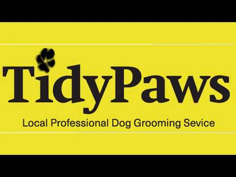 Dog Groomer Grooming Saltdean Brighton |Tidy Paws