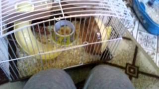 Моё 3-ье животное. 2 часть..)) смотреть всем!!!