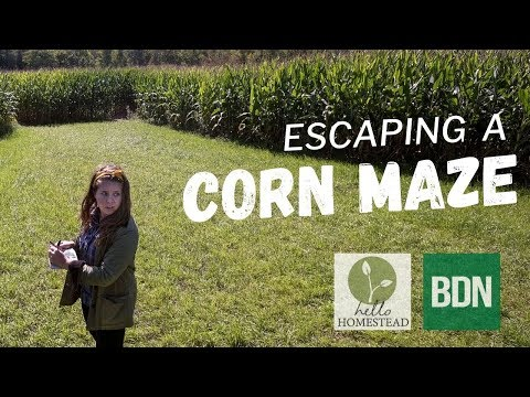 I tried to escape a corn maze. Here's how it went.