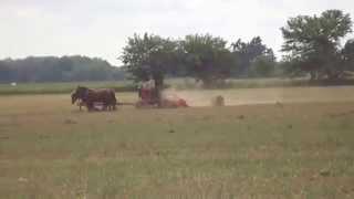 Horse drawn field cutter