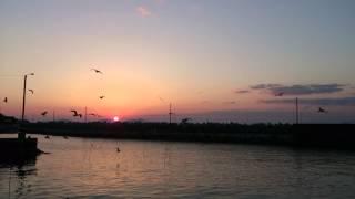 菊間町田之尻港のサンセットとカモメ