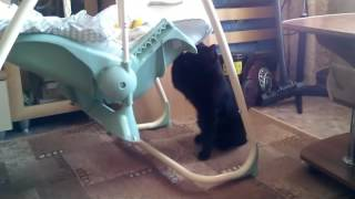 Кот Элвис Качает Малышку в люльке Черный Британский кот #прикол #забавныекоты