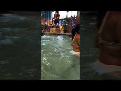 Swim-up bar in the pool 🍹🍹