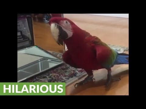 Parrot loves talking to her mirror reflection