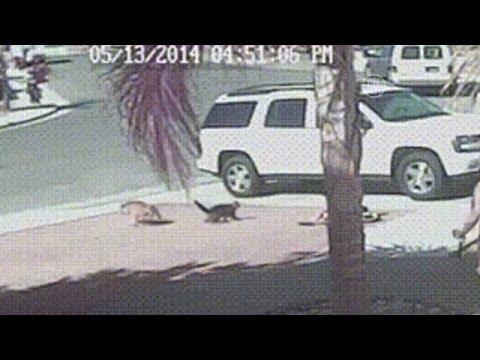 Как кот спас ребенка от собаки видео