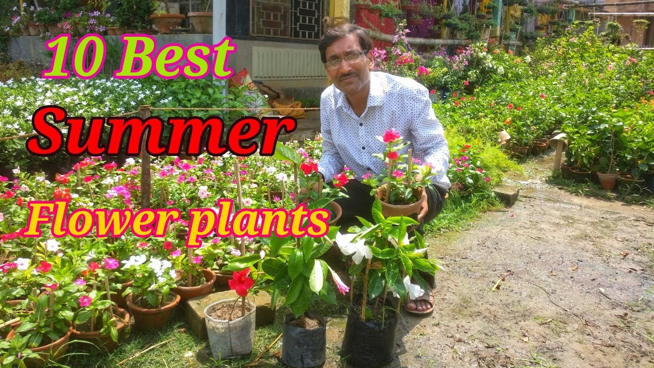 10 Best Summer Flower Plants You Would