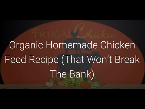 Organic Chicken Feed: A Homemade Recipe That Won't Break The Bank