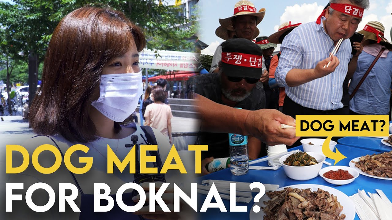 Respect Our Culture Koreans Talk About Eating Dog Meat On Boknal In Korea Youtube