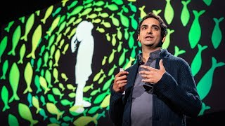 Four billion years of evolution in six minutes | Prosanta Chakrabarty