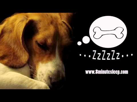 CALM YOUR DOG | Rain Sounds Soothe Anxious Dog | Nature & Bi